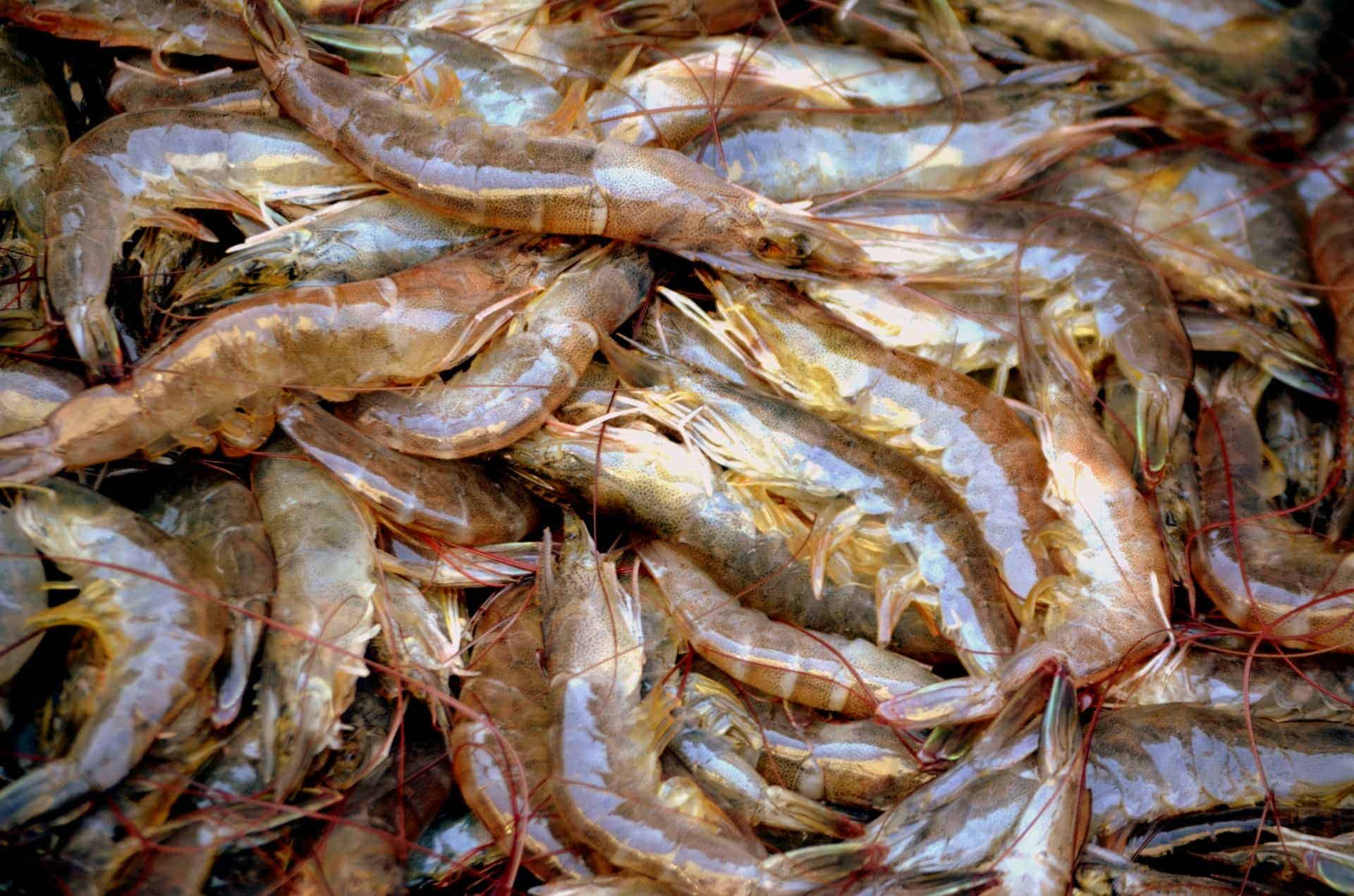 What's in your Shrimp?