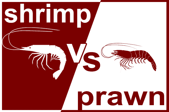 shrimp vs prawn